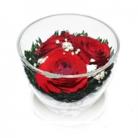 АКЦИЯ! Роза Красная 3 бутона (высота 6,диаметр 8,5)