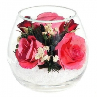АКЦИЯ! Роза розовая 3 бутона (высота 9, диаметр 10)