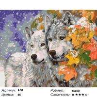 Картина по номерам 40 х 50 А 60 Пара волков