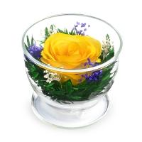 АКЦИЯ! Роза желтая (высота 9)